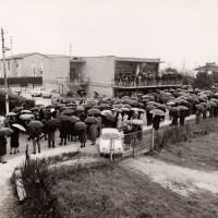 15 marzo 1969.  Santarcangelo di Romagna. La folla di cittadini e di militanti comunisti si raduna davanti alla sede del PCI in occasione del funerale del giovane Segretario della Federazione Giovanile Comunista Riminese, Loris Soldati (1947-1969), morto in un incidente stradale durante la preparazione di una manifestazione contro la NATO